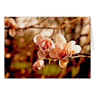 Humor de la magnolia en rosa