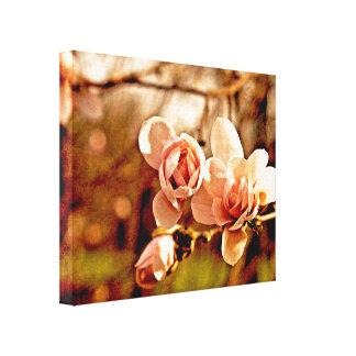 Humor de la magnolia en rosa lona envuelta para galerias