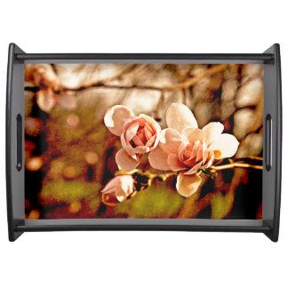 Humor de la magnolia en rosa bandeja