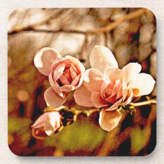 Humor de la magnolia en rosa posavaso