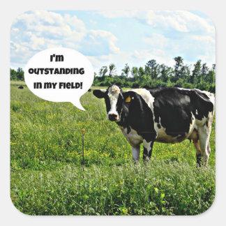Humor de la vaca calcomanía cuadradas personalizada