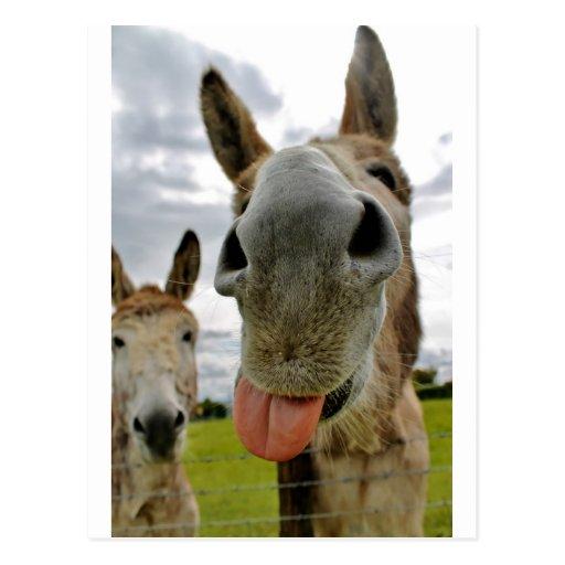 Humor del burro tarjeta postal