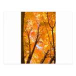 Humor del color del otoño tarjetas postales