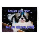 Humor del cumpleaños - perrito lindo de Shih-Tzu Tarjeta