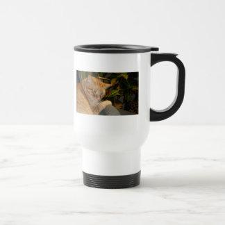 Humor del gato y del ratón tazas de café