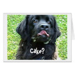 Humor del perro de Terranova de la tarjeta de cump
