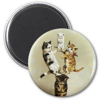 Humor lindo, el jugar de los gatitos de los gatos imán redondo 5 cm