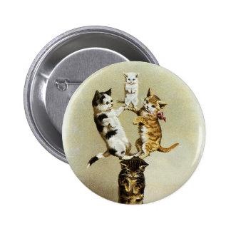 Humor lindo, el jugar de los gatitos de los gatos  pins