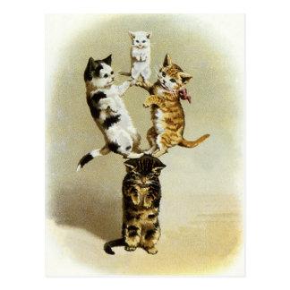 Humor lindo, el jugar de los gatitos de los gatos  postal