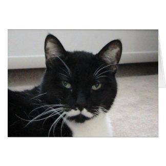 Humor Tuxedo Cat Birthday Card template
