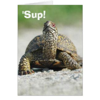 Humorous Box Turtle Greeting Card