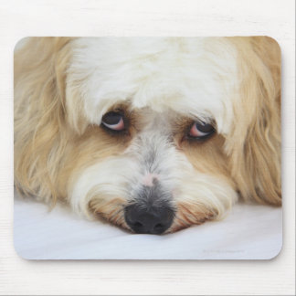 humorous close-up of bichon frise dog mouse pad