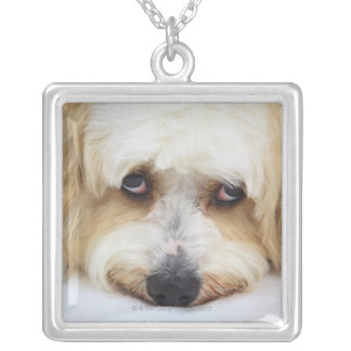 humorous close-up of bichon frise dog square pendant necklace