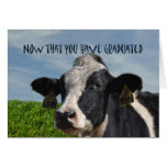 Humorous Congratulations on Graduating Cow Bovine Greeting Cards