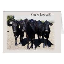 "Humorous Cow ""Getting Older"" Birthday Card"