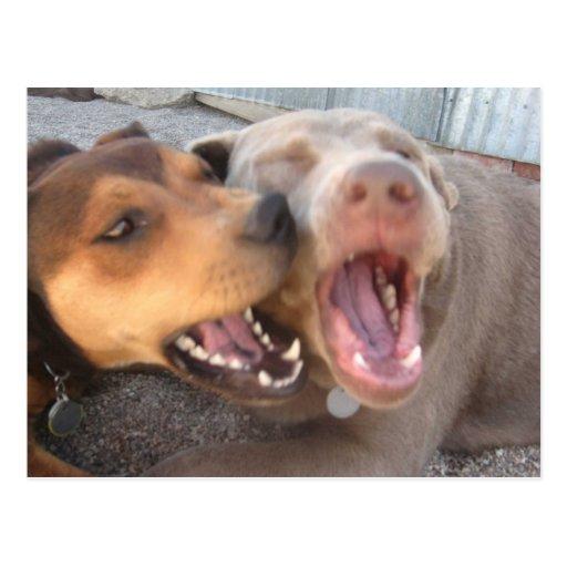 Humorous Dog Postcard