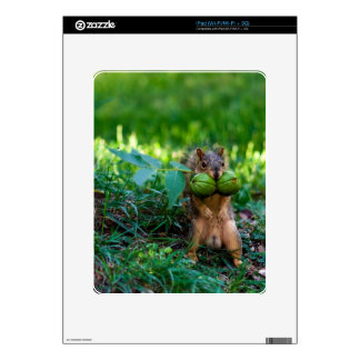 Humorous Squirrel with Two Nuts in Mouth Decals For The iPad