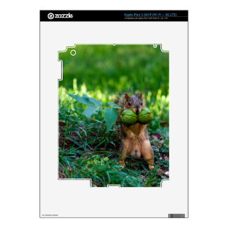 Humorous Squirrel with Two Nuts in Mouth iPad 3 Decal