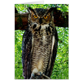 "Humorous ""Valley of Death"" Great Horned Owl Greeting Card"