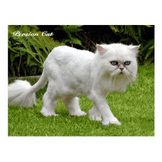 Humorous White Persian Cat Postcard