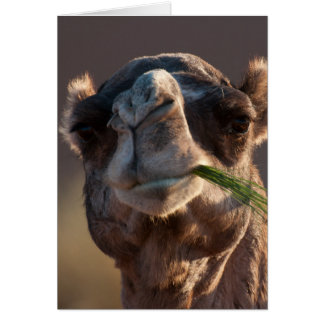Hump Day Camel Feasting on Green Grass Stationery Note Card