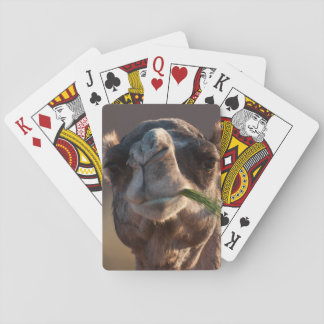 Hump Day Camel Feasting on Green Grass Deck Of Cards