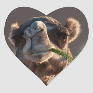 Hump Day Camel Feasting on Green Grass Heart Sticker