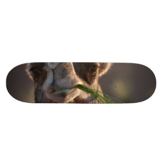 Hump Day Camel Feasting on Green Grass Skate Board Deck