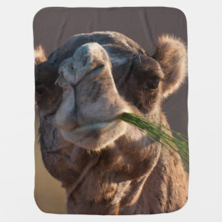 Hump Day Camel Feasting on Green Grass Swaddle Blanket