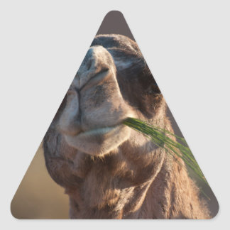 Hump Day Camel Feasting on Green Grass Triangle Sticker
