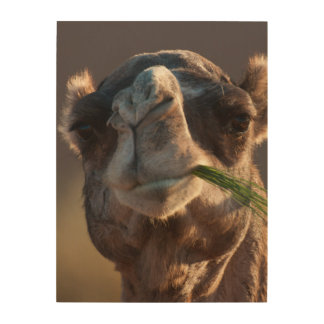 Hump Day Camel Feasting on Green Grass Wood Wall Decor