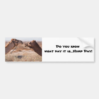 Hump Day Camels Bumper Sticker