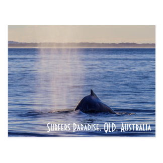 Humpack Whales Surfers Paradise Queensland Postcard