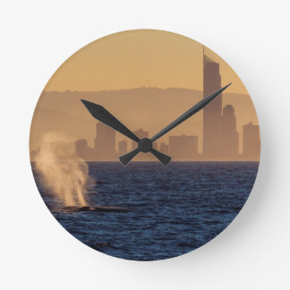Humpack Whales Surfers Paradise Queensland Round Clock