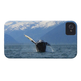 Humpback Barrel Roll iPhone 4 Cover