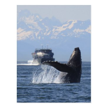 USA Themed Humpback in Alaska Postcard