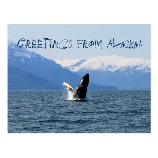Humpback on the Surface; Alaska Souvenir Postcards