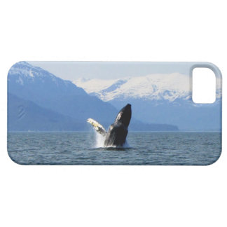 Humpback on the Surface iPhone SE/5/5s Case