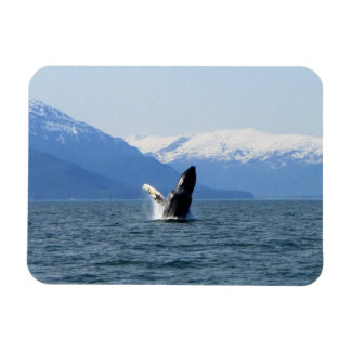 Humpback on the Surface Rectangular Photo Magnet