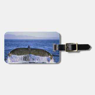 Humpback tail. bag tag