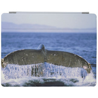 Humpback tail. iPad smart cover