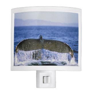 Humpback tail. night light
