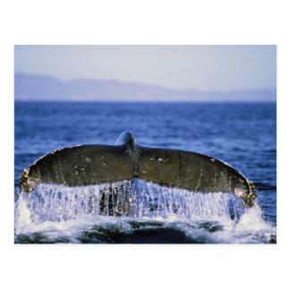 Humpback tail. postcard