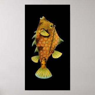 Humpback Turretfish, Ernst Haeckel Print