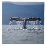 Humpback Whale 2 Ceramic Tiles