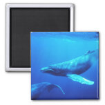 Humpback Whale 2 Inch Square Magnet