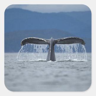 Humpback Whale 2 Square Sticker