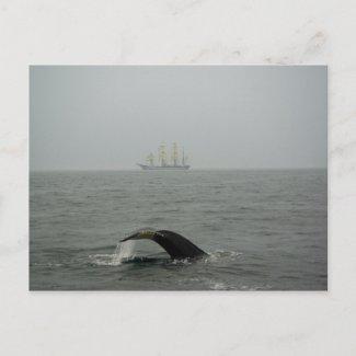 Humpback Whale and Tall Ship 2 Postcard postcard