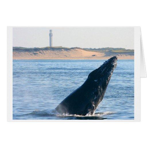 humpback whale breach card