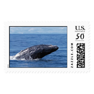 Humpback whale breach postage